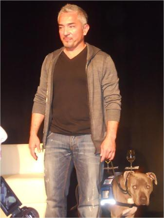 Cesar Millan, the Dog Whisperer, received Latinovator award at Hispanicize 2012 - here pictured with one of his 20 dogs at the event.